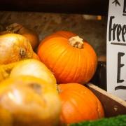 pumpkins-9845